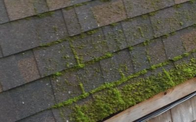 How to Remove Algae/Mold from the Roof?